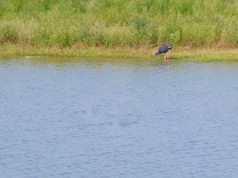 dia ocells delta-2