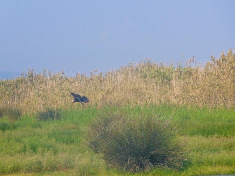 dia ocells delta-4